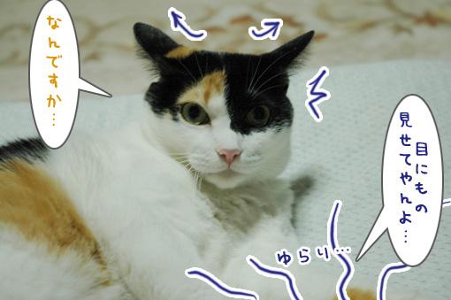 06_20090927131740.jpg