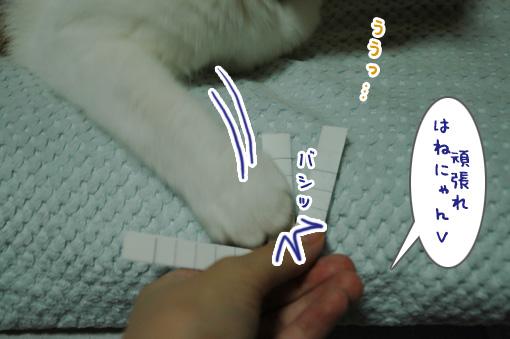 06_20091001225329.jpg