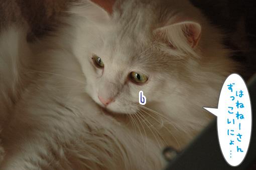 06_20091106001624.jpg