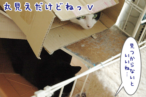 06_20091129142758.jpg