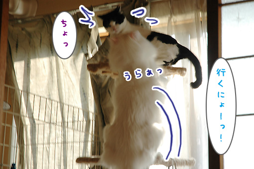 06_20091130175708.jpg