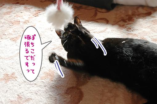 06_20100106192104.jpg