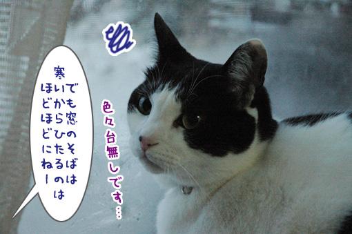 06_20100206194057.jpg
