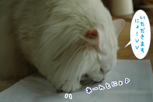 06_20110531173908.jpg