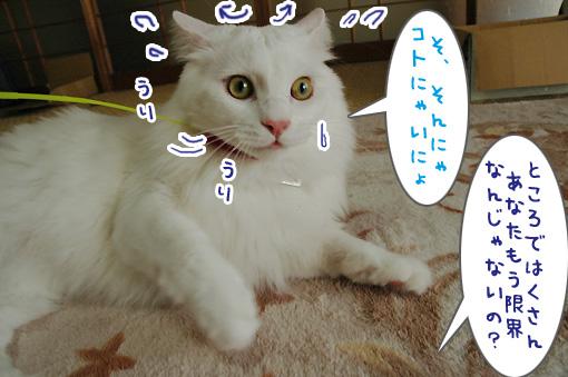 07_20090918235321.jpg