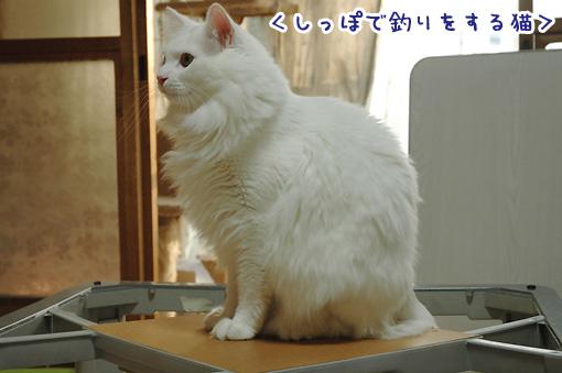 07_20091106001624.jpg