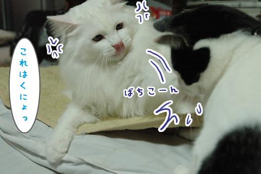 07_20091122214820.jpg