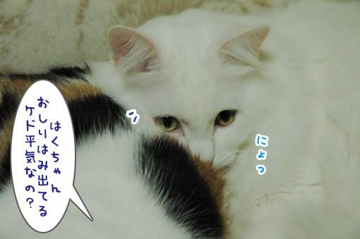 07_20091126225843.jpg