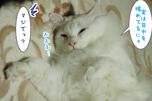 07_20091202201453.jpg