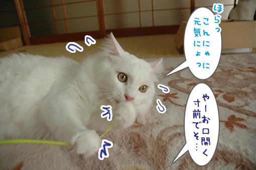 08_20090918235320.jpg