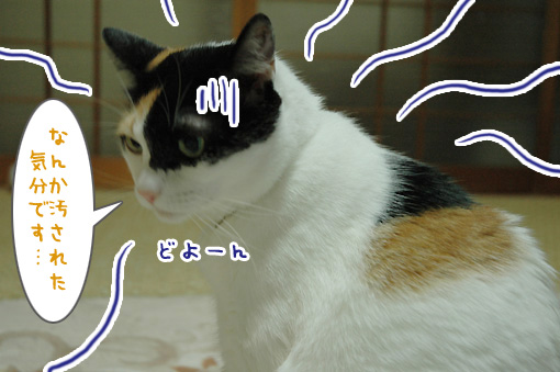 08_20090927131739.jpg