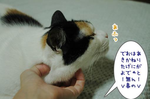 08_20091001225248.jpg