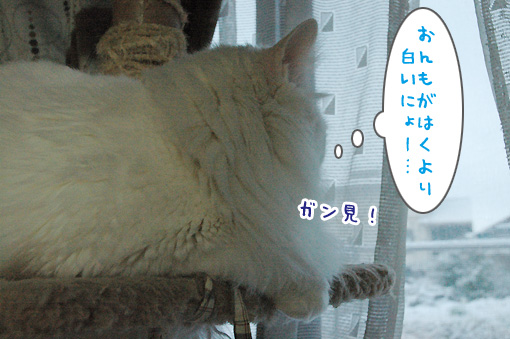 08_20100206194057.jpg