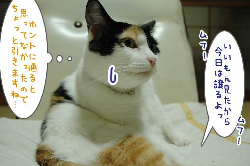 09_20090924001637.jpg