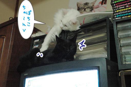09_20090930235146.jpg