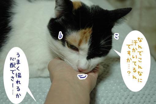 09_20091001225248.jpg