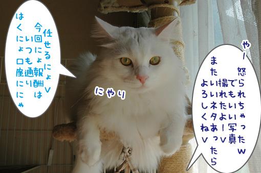 09_20091003234311.jpg