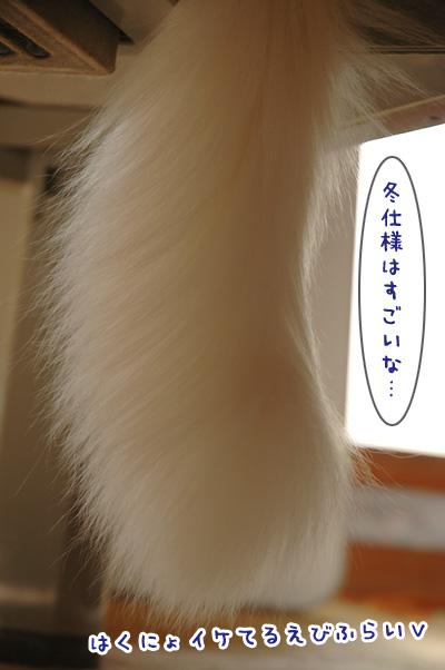 09_20091106001624.jpg