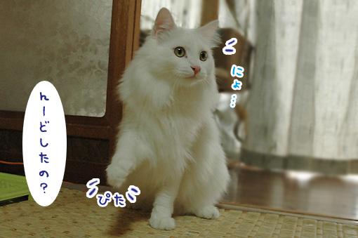 09_20091114233754.jpg