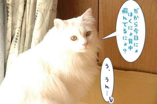 09_20100226181355.jpg