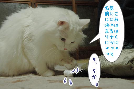 09_20100327183432.jpg