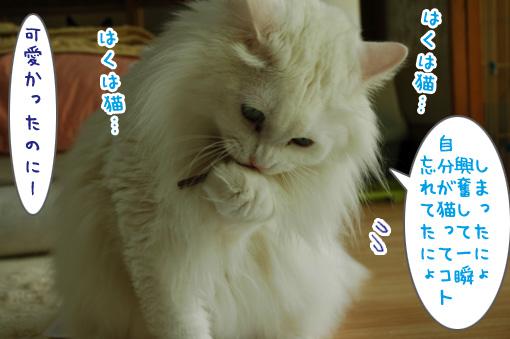 09_20110531181501.jpg