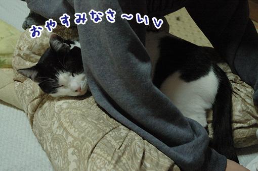 10_20091109001742.jpg