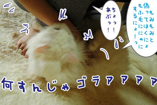 11_20100623220748.jpg