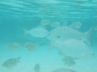fish_pn1