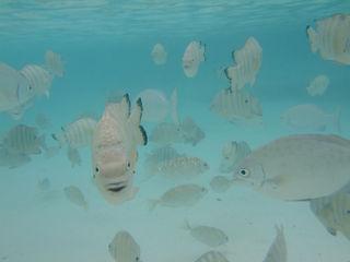 fish_pn5