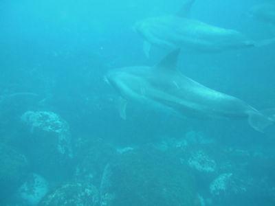 dolp1.jpg