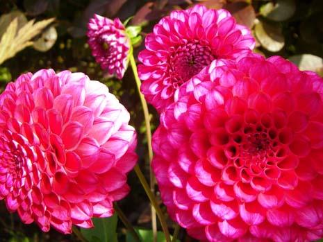 お花のぽんぽんの大きさは、10cmくらいだったかな?