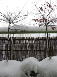 ポーランド 雪