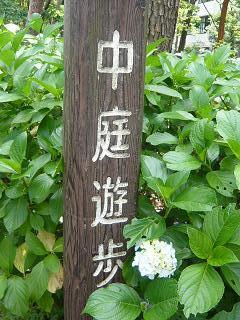 2010あじさい1