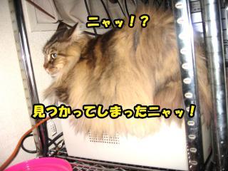 dog.cat 044