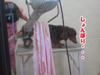 dog.cat 090