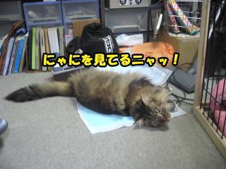 dog.cat 109