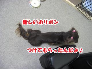 dog.cat 145