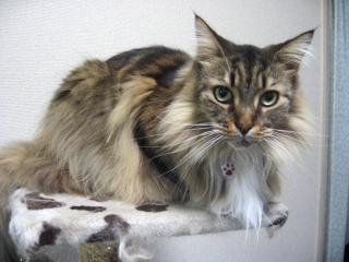 dog.cat 056