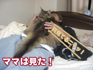 dogcat 073