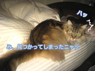 dogcat 086