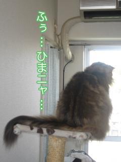 dogcat 084