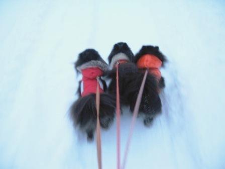 雪道散歩 035