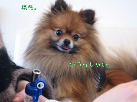 あづきちゃん