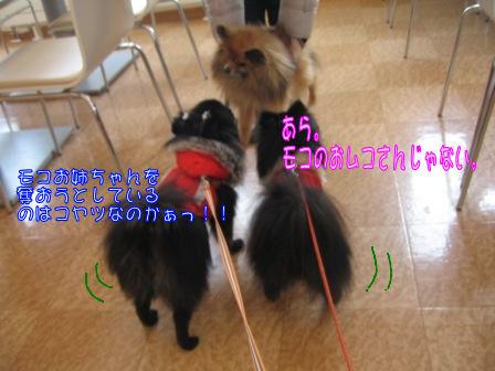 あづきちゃん&モコゴロ