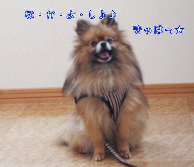 あづきちゃん1
