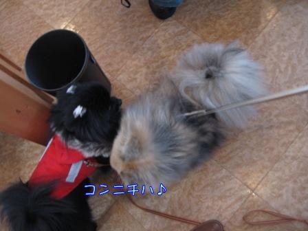FUUちゃん&ゴロ