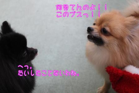 ココちゃん&モコ