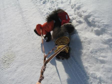 冬のお散歩 005