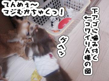 DSC07361.jpg